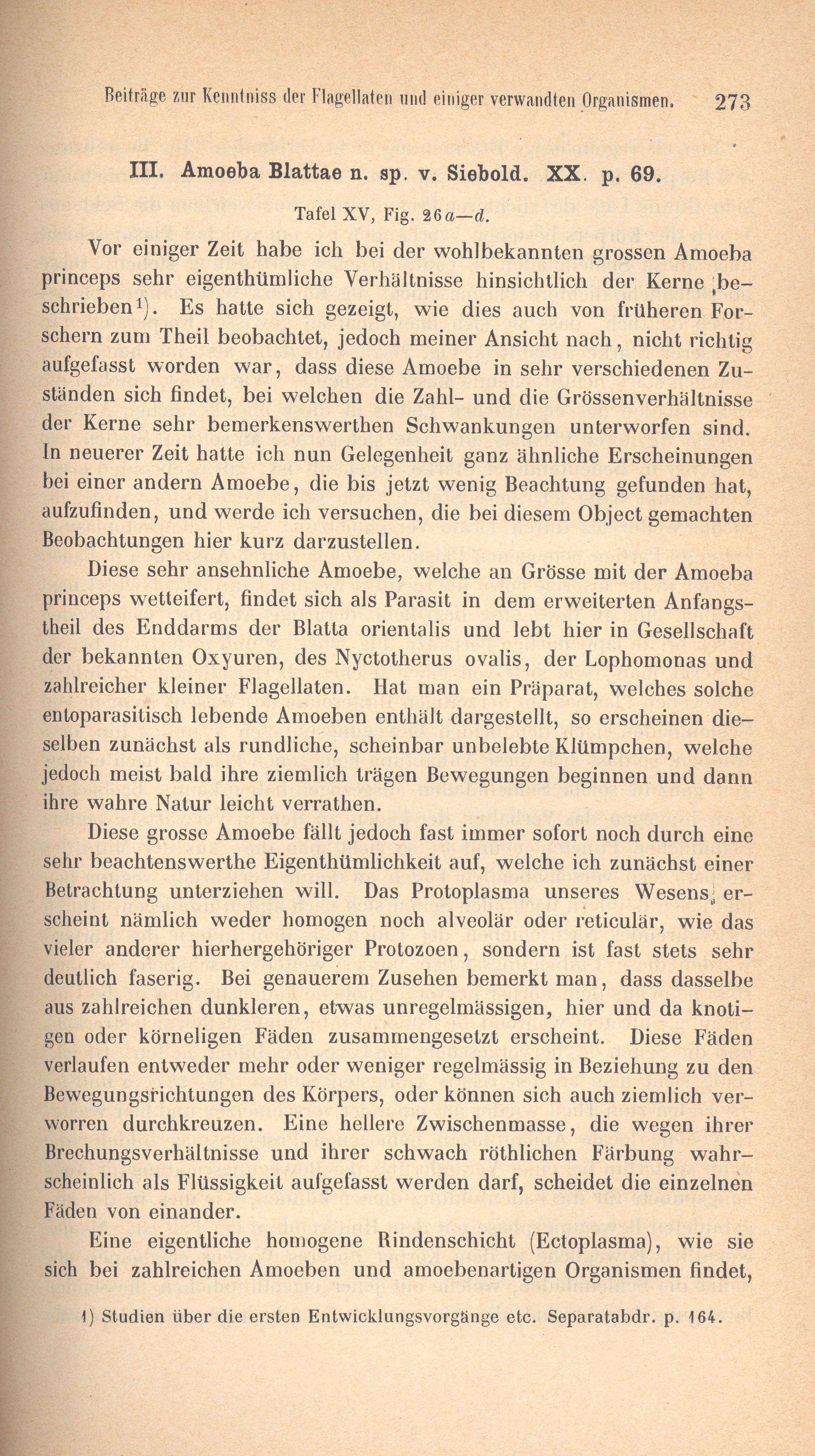 Gemütlich Anatomie Der Amöbe Zeitgenössisch - Physiologie Von ...
