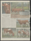 Thumbnail image of Chicago Tribune : Tribune herd subject of unusual tests