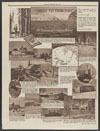 Thumbnail image of Chicago Tribune : trees to Tribunes : the romance of newspaper-making