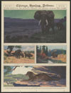 Thumbnail image of African buffaloes on the Hillside