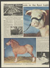 Thumbnail image of Grand champion Hereford female of the 1936 live stock show
