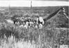 Group photo of Glidden tourists on the Colorado prairie, at 1909 Glidden Tour