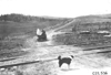 Dog stands in middle of road as Glidden tourists approach near Colorado Springs, Colo., at 1909 Glidden Tour