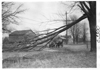 E.M.F. car blocked by fallen tree limb on road, on pathfinder tour for 1909 Glidden Tour