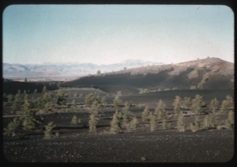 Vegetation in 1500 year old lava flow craters of Nat'l Mon