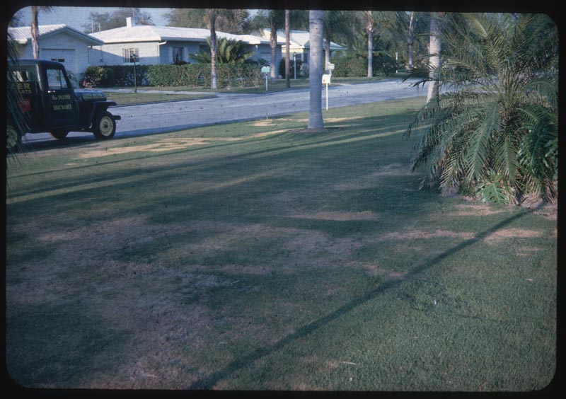 Matted Zoysia lawn causes Fairy ring