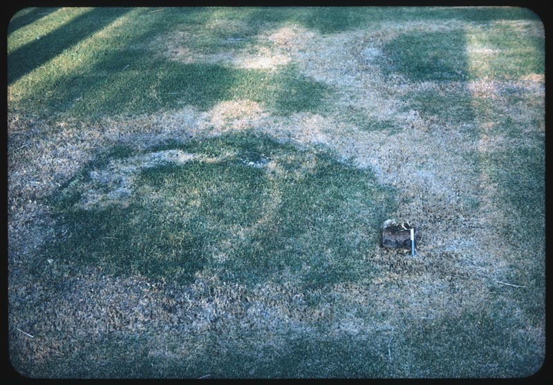 Close-up Fairy rings in thatched zousia