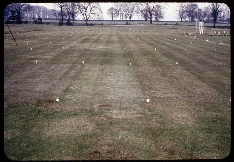 Another view of fert. plots