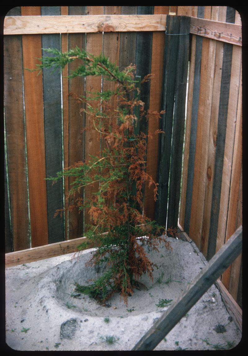 Tree Wind Breaker