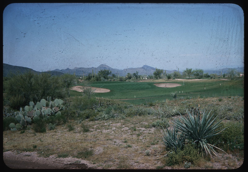 View of Desert Forest C. C.