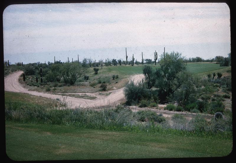 Desert Forest C. C.