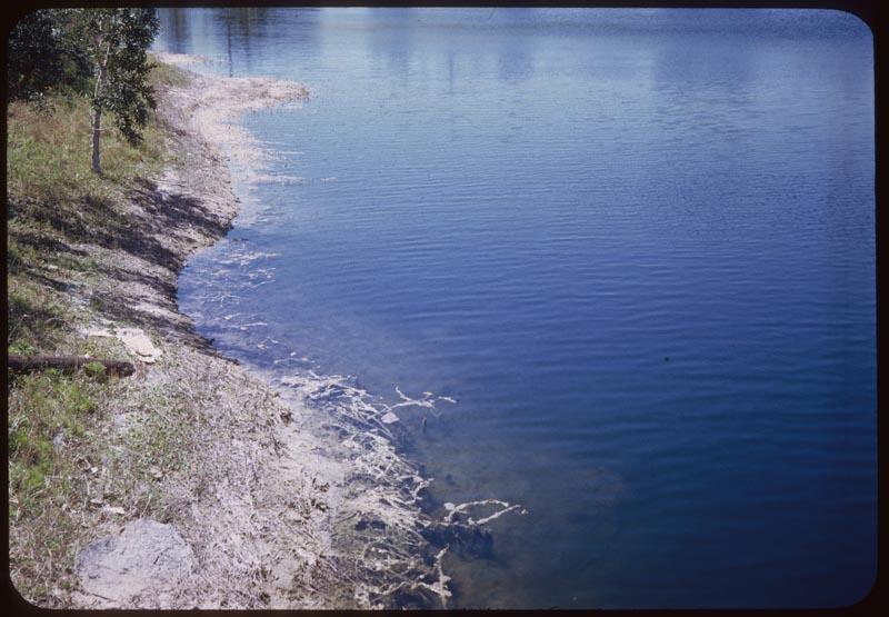 Dalapon Control Lake edge Dye in water