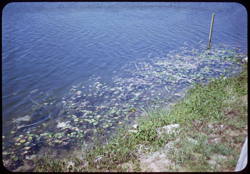 Lake Weeds Near Shore Dye Doesn't Control