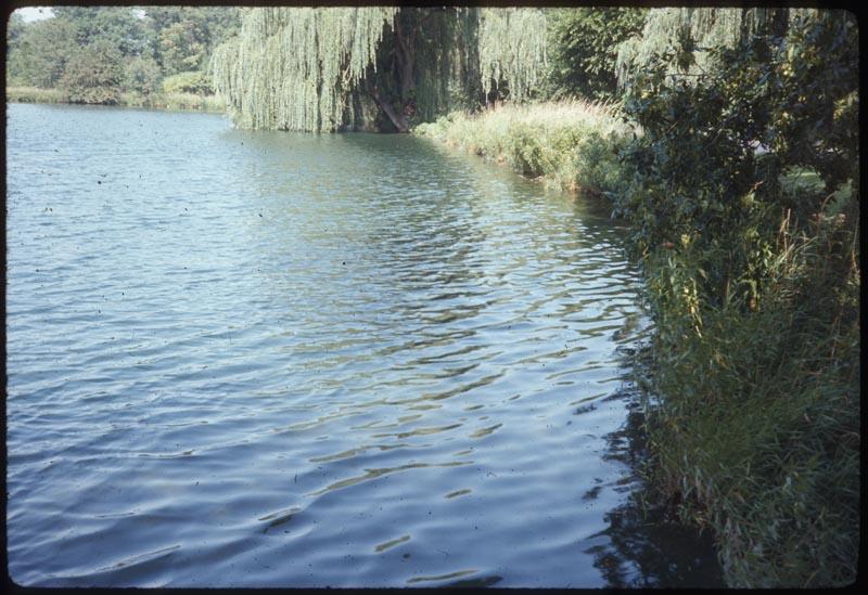Aquashaded pond.