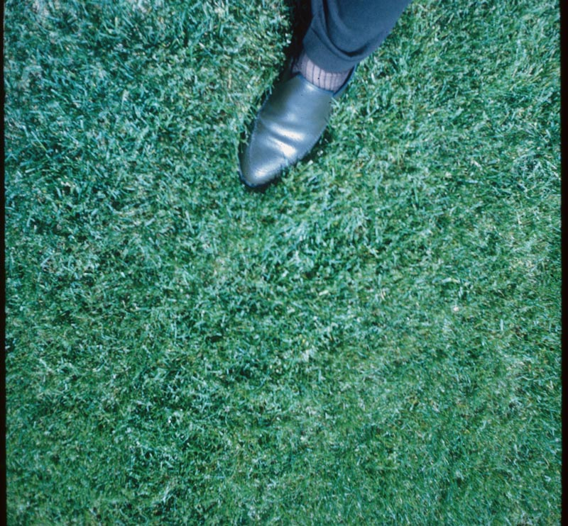 7 Acre Lawn -- 1 TN/A/YR Milorganite June-Aug-Dec