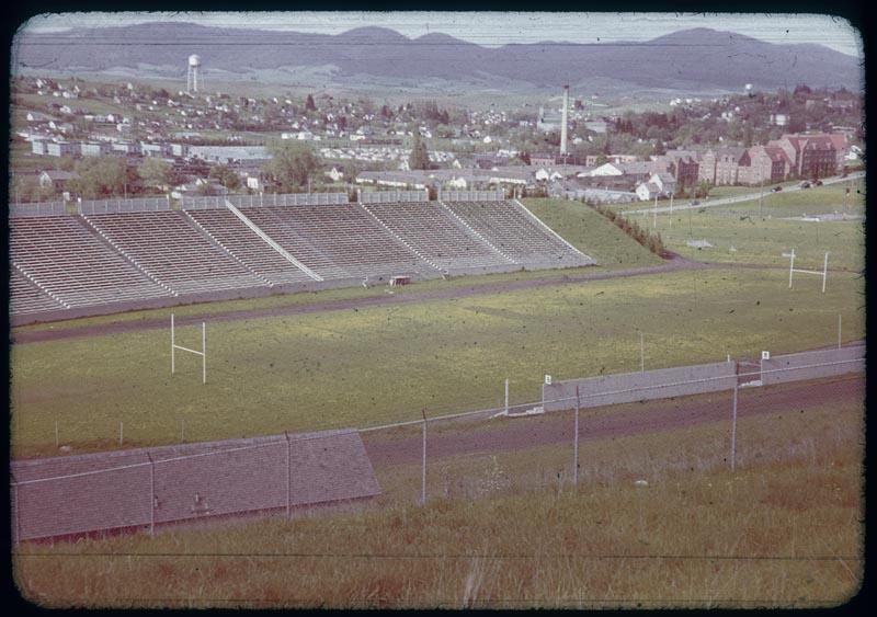 Dandelion in stadium turf