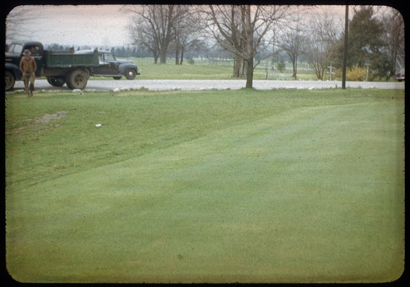 Poa Annua collar from mower & tree roots