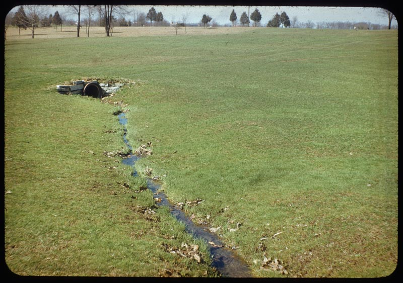 Bent thrives wet spot in F.