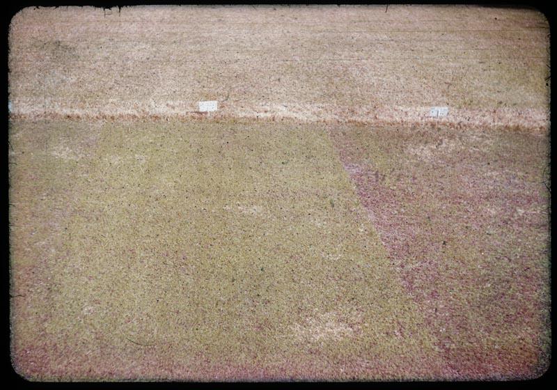 Poa Triv. - Zaun Mix. - f-74 over-seeding