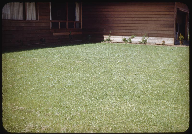 Unsightly lawn rye in mixture