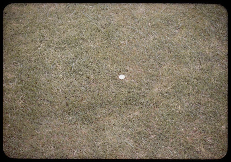Athletic Field   close-up turf