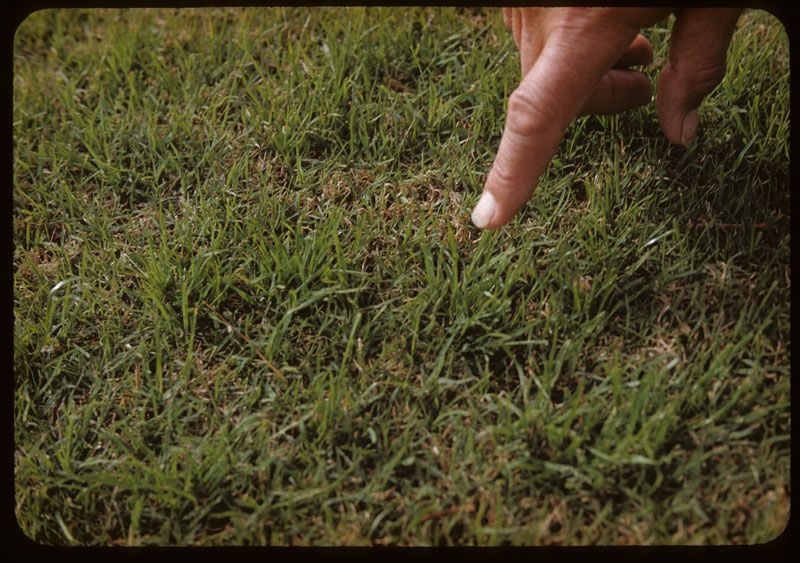 Rye Seedlings in Aerifier holes