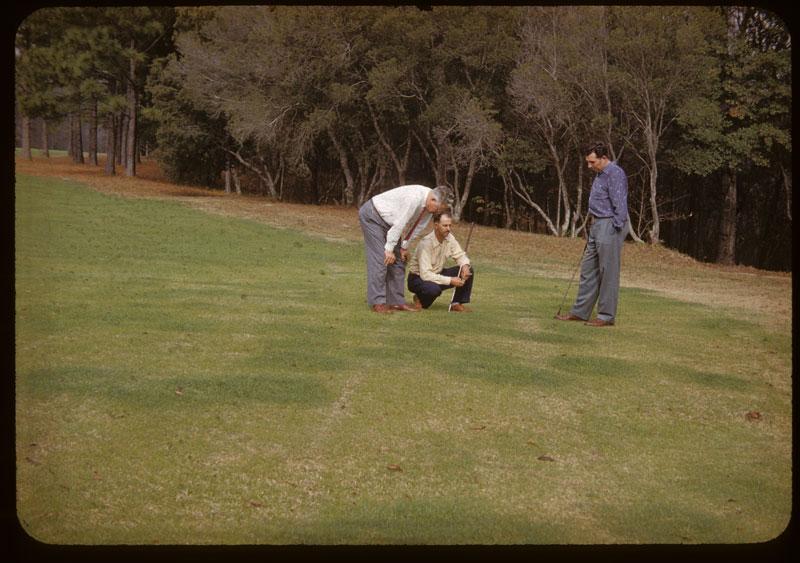 Carpetgrass kill dry Amm. Sulfate