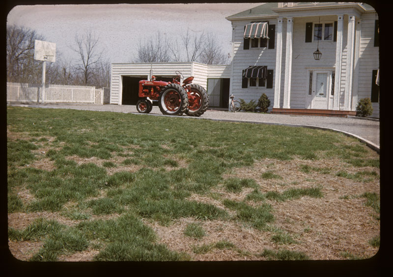 Blue lawn crab year before