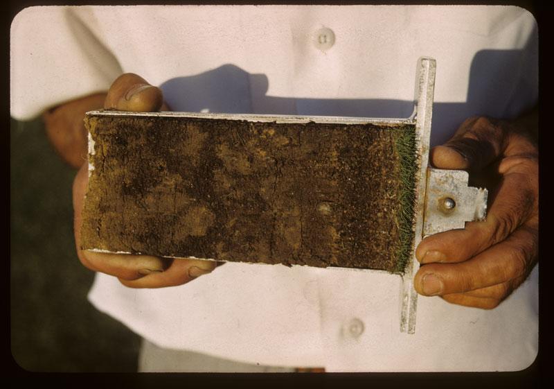 Soil profile #2-G Sand, manure, & litt Fert.