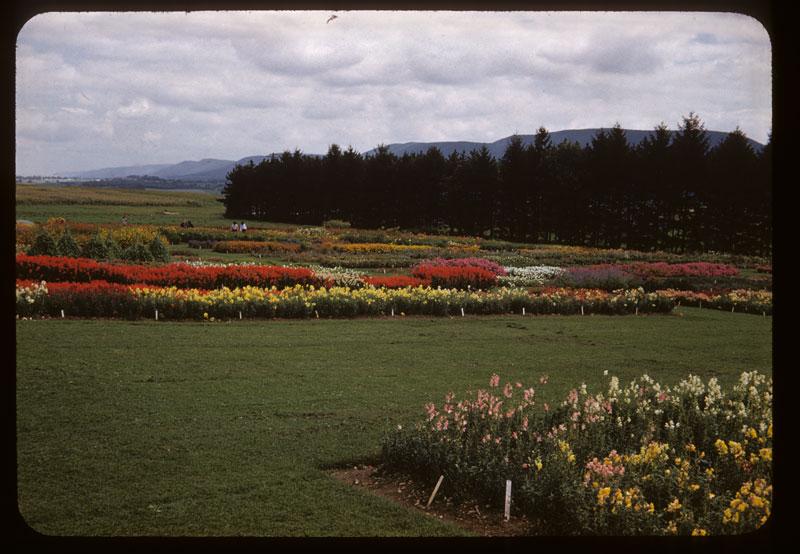 Flower variety Test Plots