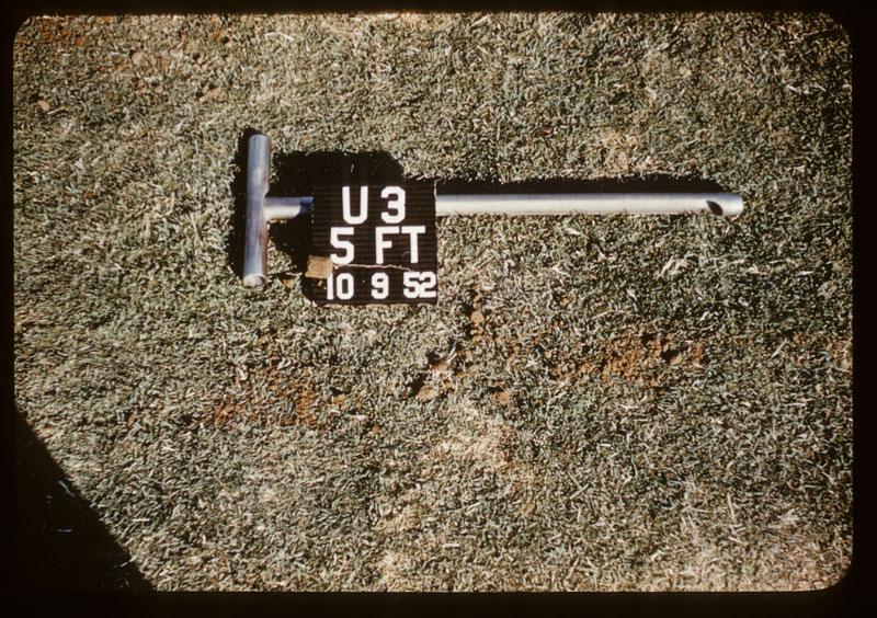 U-3 has roots 5' deep