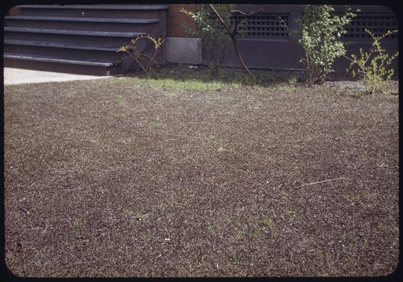 Solid dead crabgrass lawn