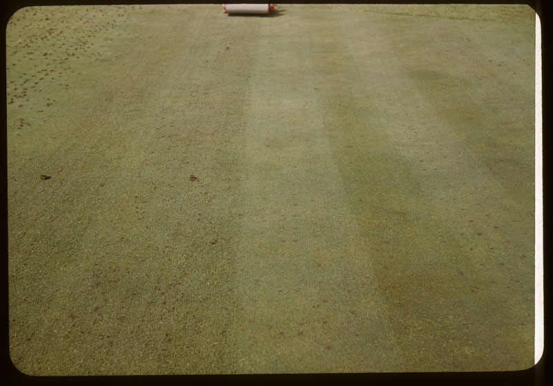Turf after Verti-cut & mower