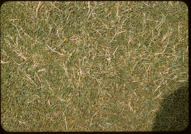 Stringy Poa Triv. in bent G