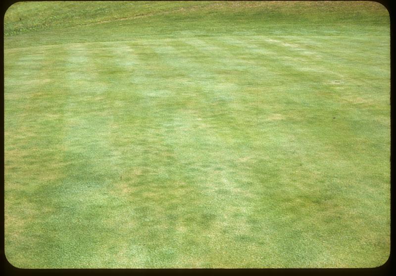 Greener grass above aerifier holes
