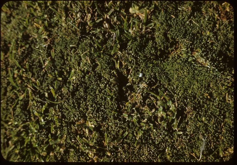 Moss in bent G