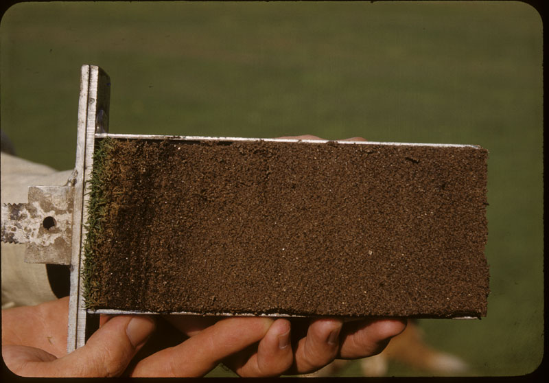 Thatch G Profile wet surface