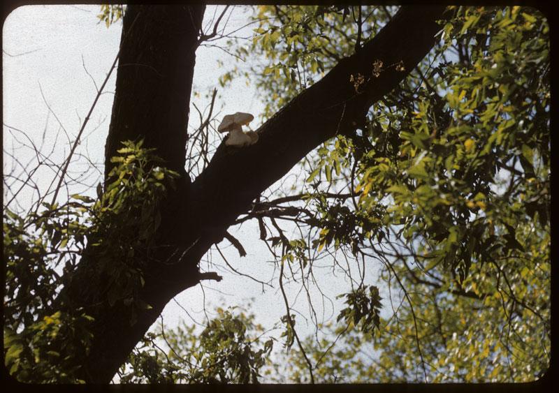 Mushroom on tree
