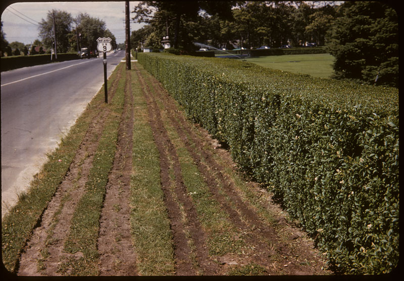 U-3 bermuda strip planted on pkwy