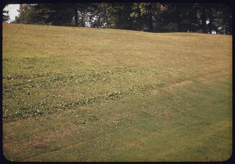 Water brings weeds into rough via F sprinkler