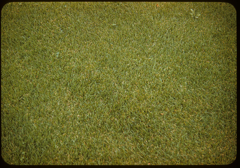 Merion Lawn