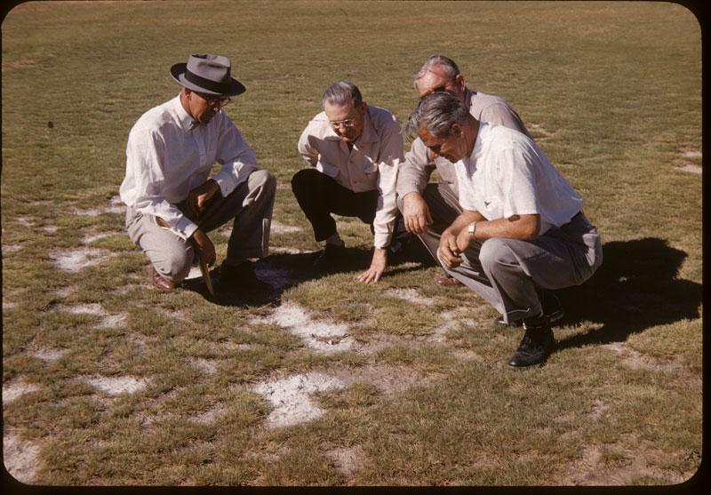 Salt Grass grows in salt Broderick, Hook Richardson