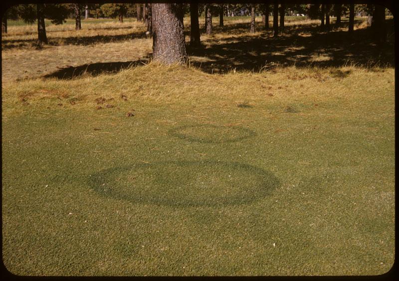 Round Fairy rings