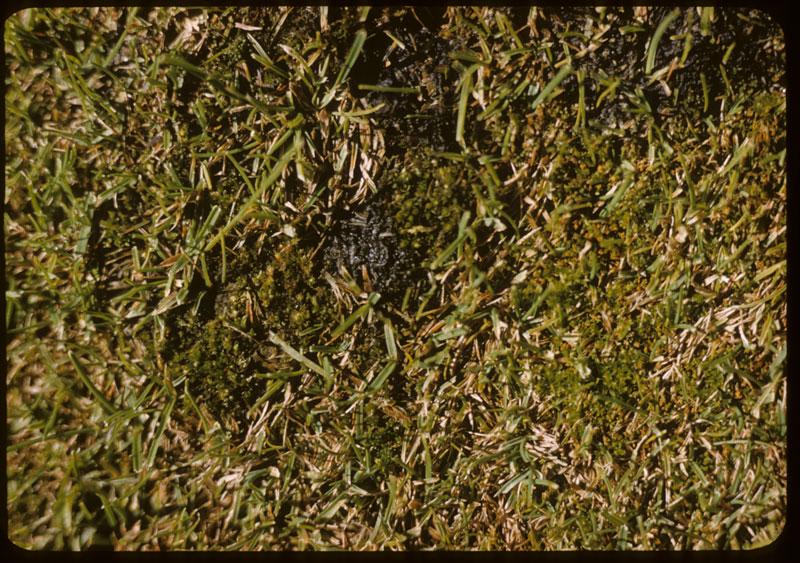 Moss in G