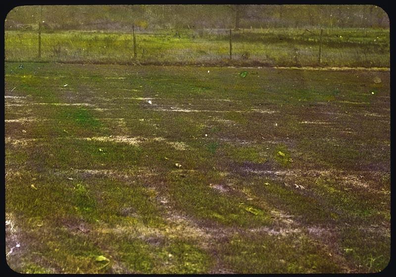 Seed establishment with no fertilizer (Tuckaway Country Club, WI - 1928)