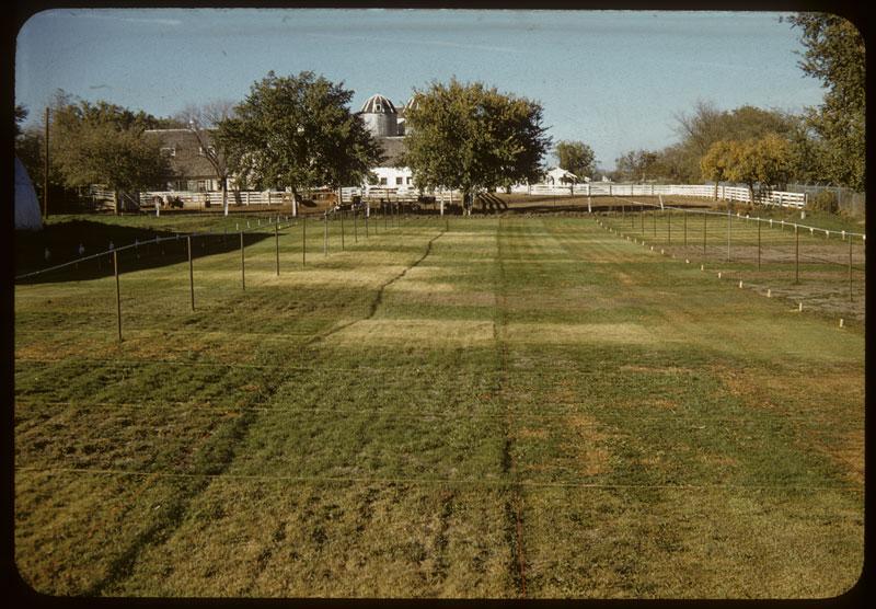 View of turf plots