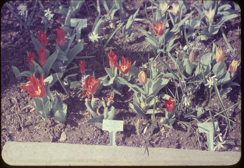 Spring Flower bulbs bloom