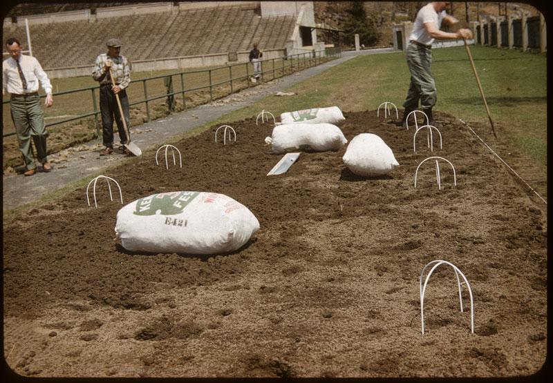 Dowfume wickets hold tarp off ground