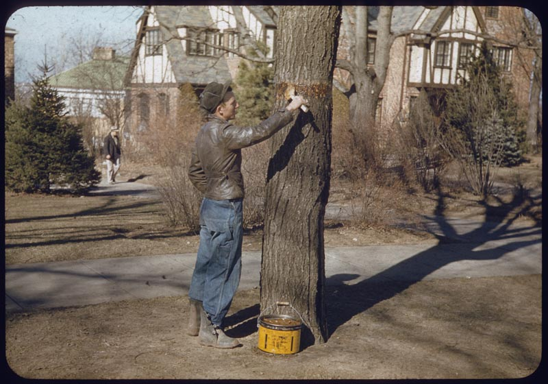 Tree banding