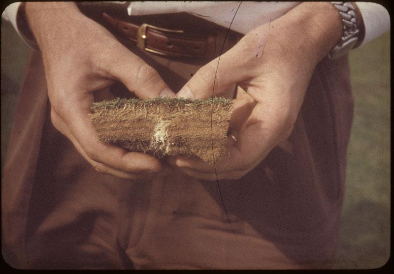 Heavy thatch profile-Fungus mycelium
